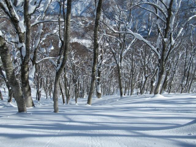2月4日 適度なツリー