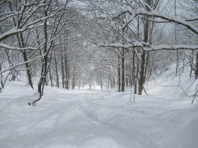 2月25日 ボテボテ雪.もう春.