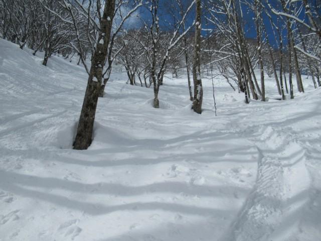 2月25日 ボテボテツリー