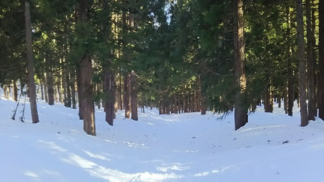 3月25日 戻り林道