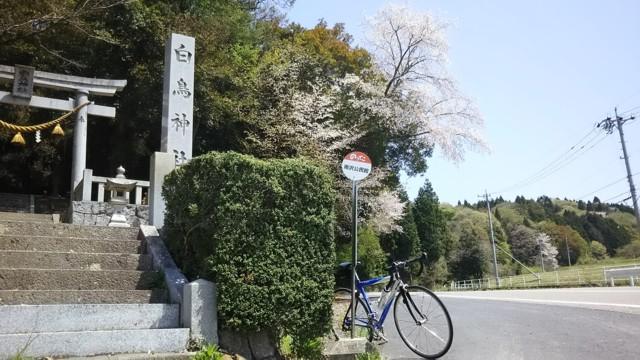 5月2日 雨沢峠2本