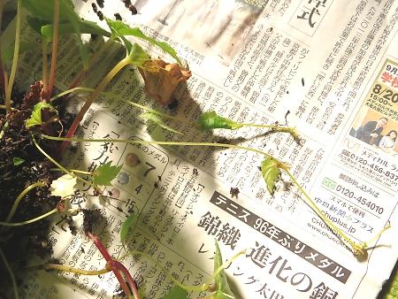 t_IMG_4376.jpg