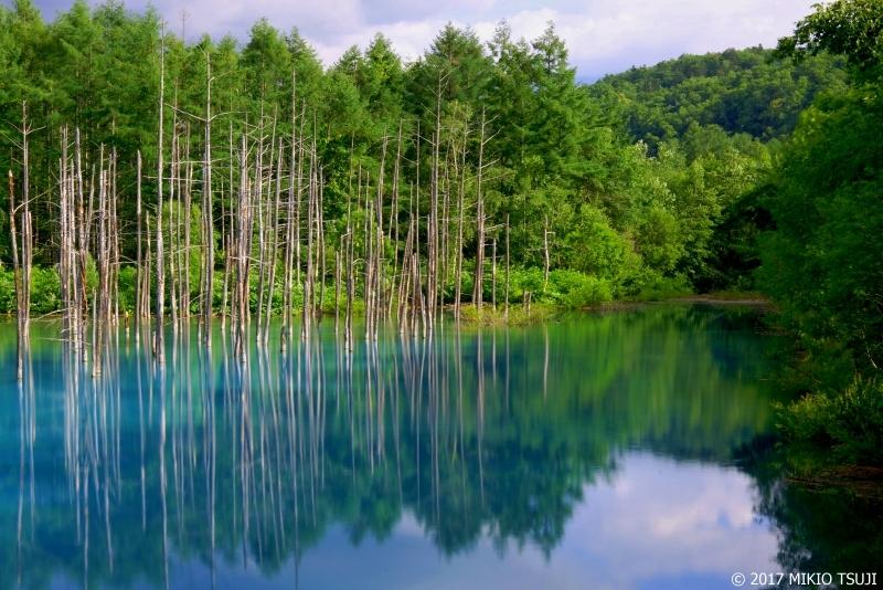 絶景探しの旅 - 0280 青い池に映える (北海道 美瑛町)