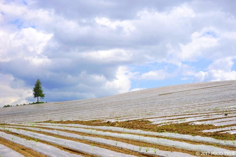 絶景探しの旅 - 0284 初夏の白銀の丘 (北海道 美瑛町)