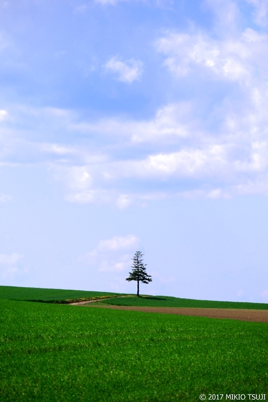 絶景探しの旅 - 0291 孤独な木と3時の影 (北海道 美瑛町)