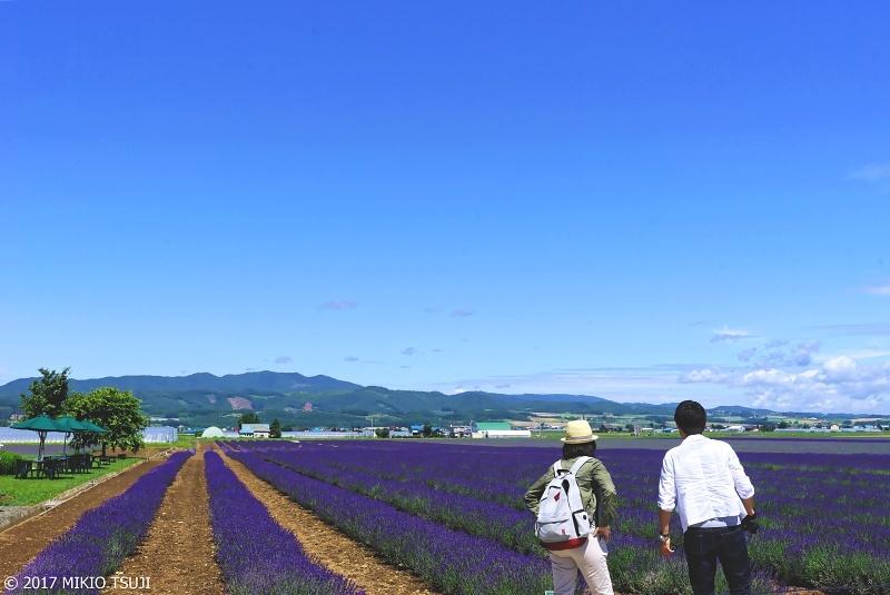 絶景探しの旅 - 0305 日本最大級のラベンダー畑(ファーム富田イースト/北海道 上富良野町)