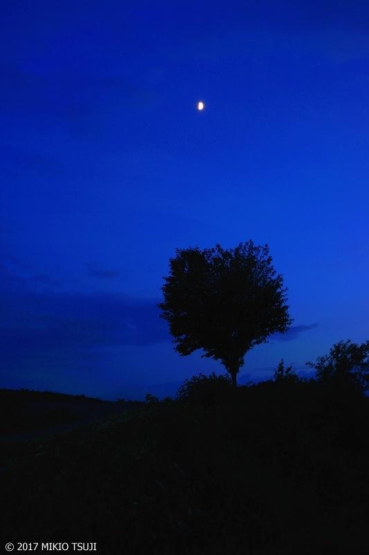 絶景探しの旅 0310 夜の丘の一本の木 (北海道 美瑛町)