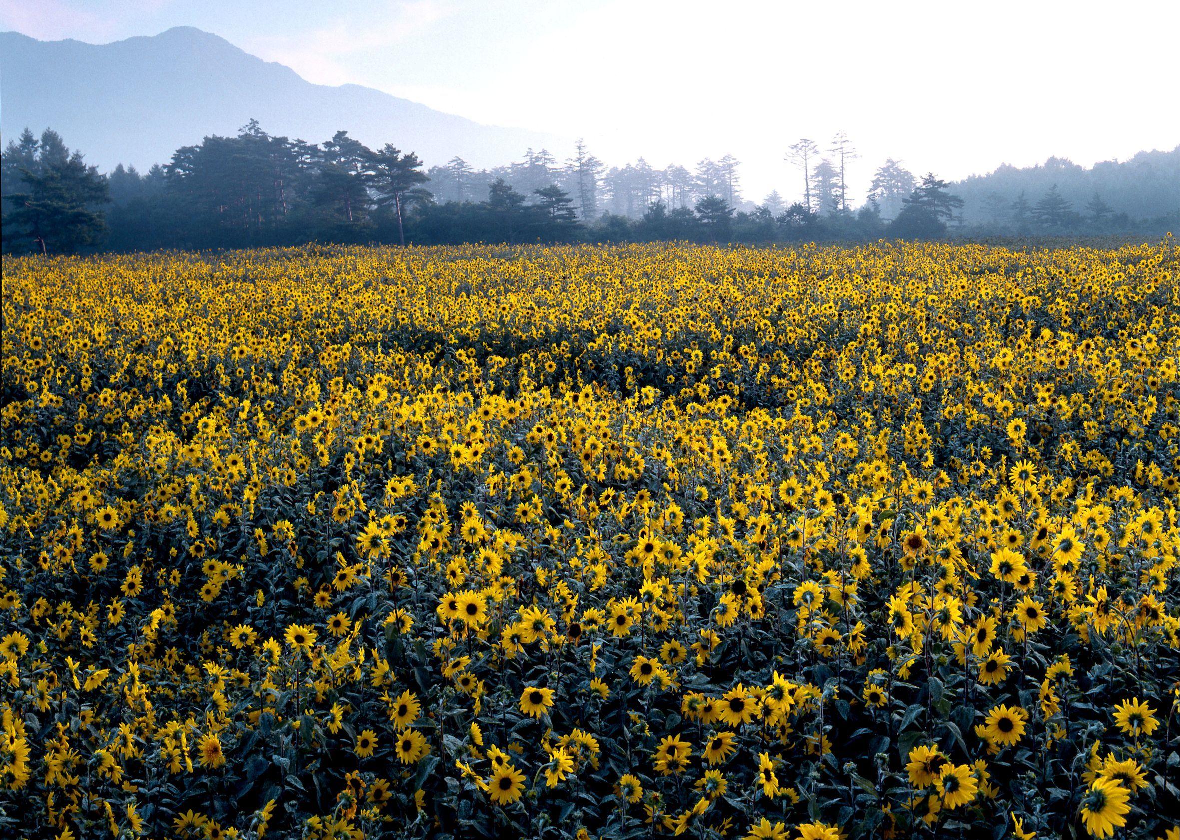 19940910山中湖花の都公園1ab