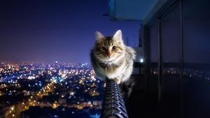 cat00924.jpg
