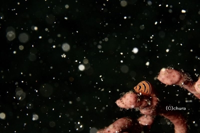 808 海に降る雪