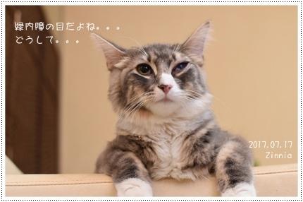 ブドウ膜炎・結膜炎→緑内障・網膜剥離(も!?)2