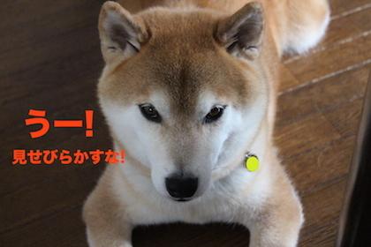 IMG_7702.jpg