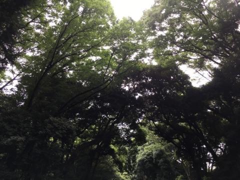 2017-06-30_16-00-25.jpg