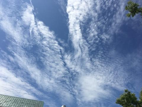 2017-08-04_10-06-57.jpg