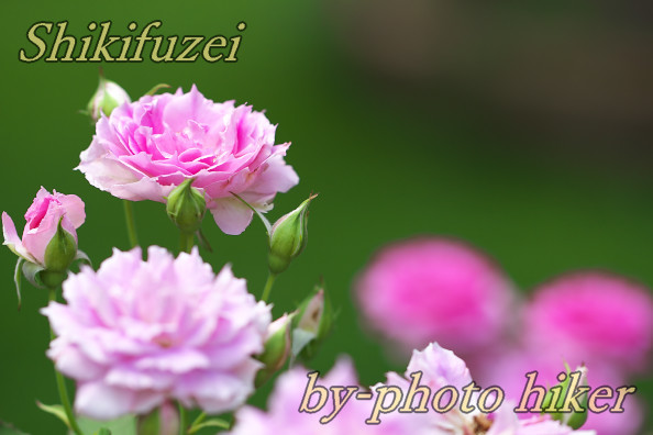 15_20170716083812bbc.jpg
