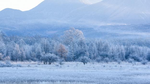 霧氷の花咲く貴婦人・小田代ヶ原