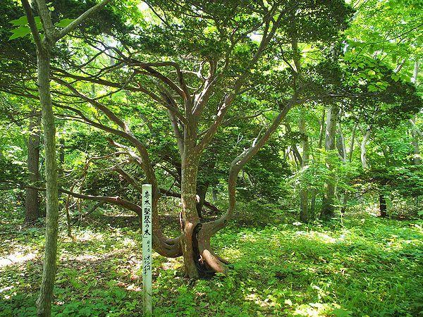 オンコ林園地