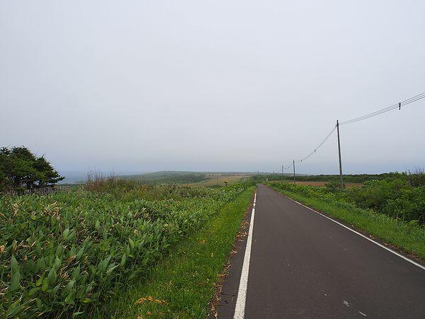牧場の一本道