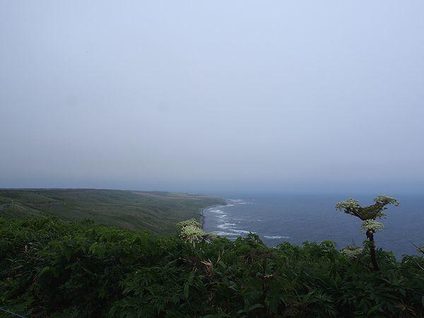 焼尻島の全景