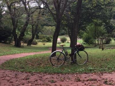 三ツ池 金木犀