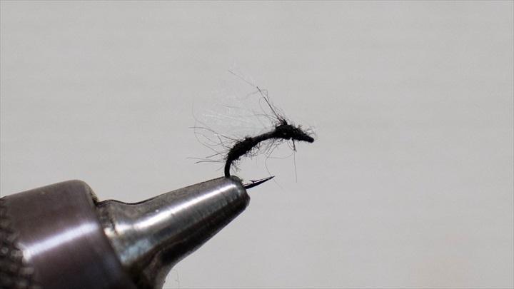 ant-adult-0001-008.jpg