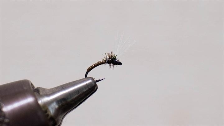 mosquito-immature-0001-010.jpg
