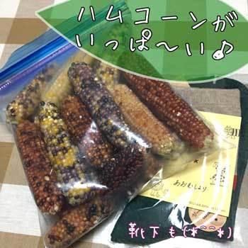corn_201709192130335c0.jpg