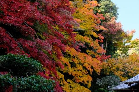 當麻寺西南院・庭園の紅葉