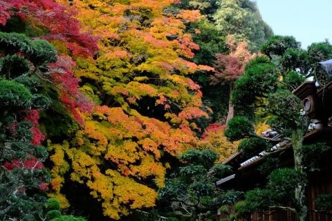 當麻寺西南院・庭園の紅葉2