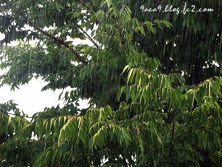 梅雨はいつ明ける