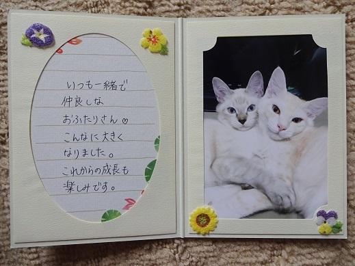 チックタック(福・セーラ)