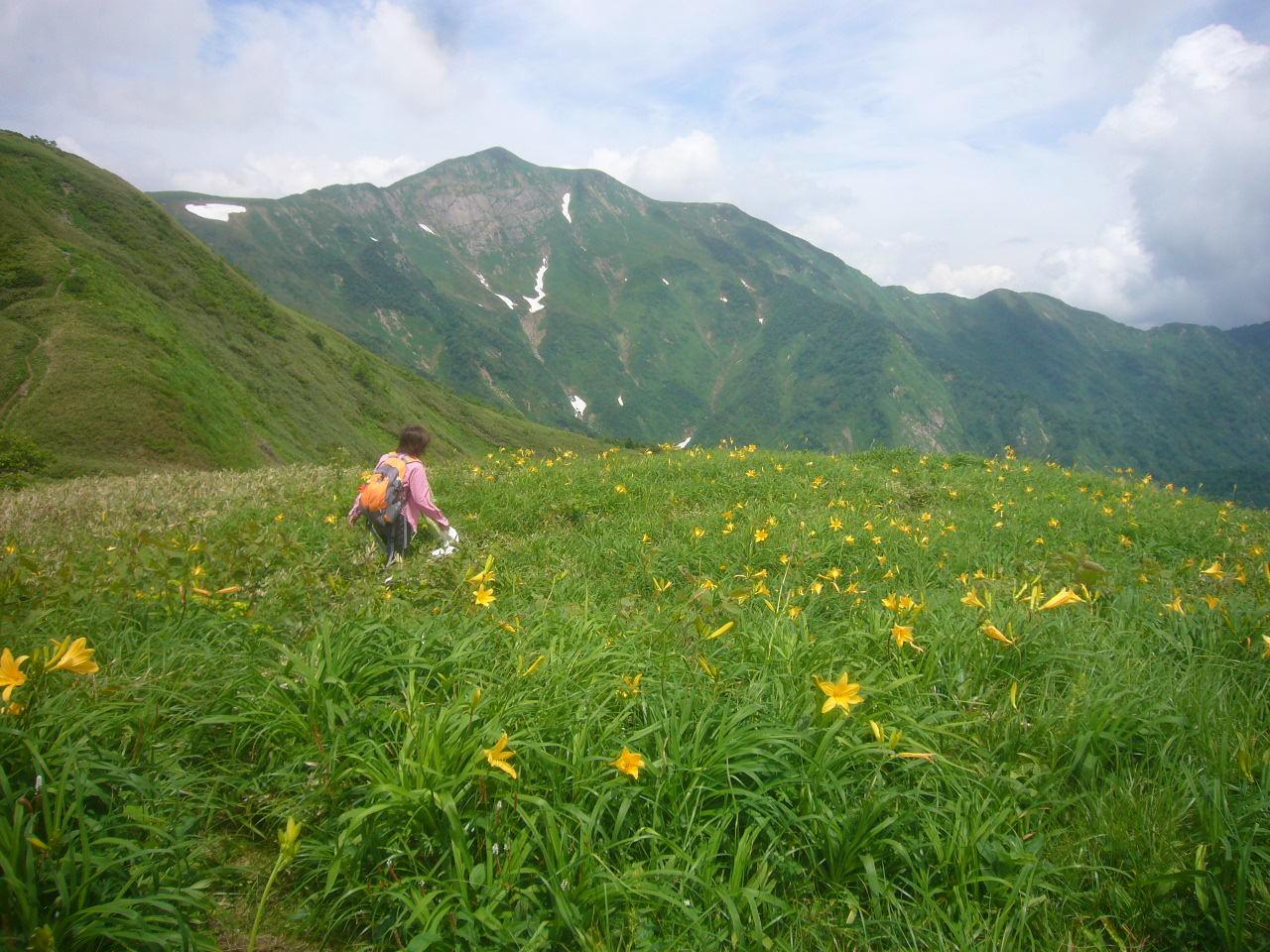 越前3の峰のお花畑 正面が別山、左奥に石川3の峰 H29.7.15