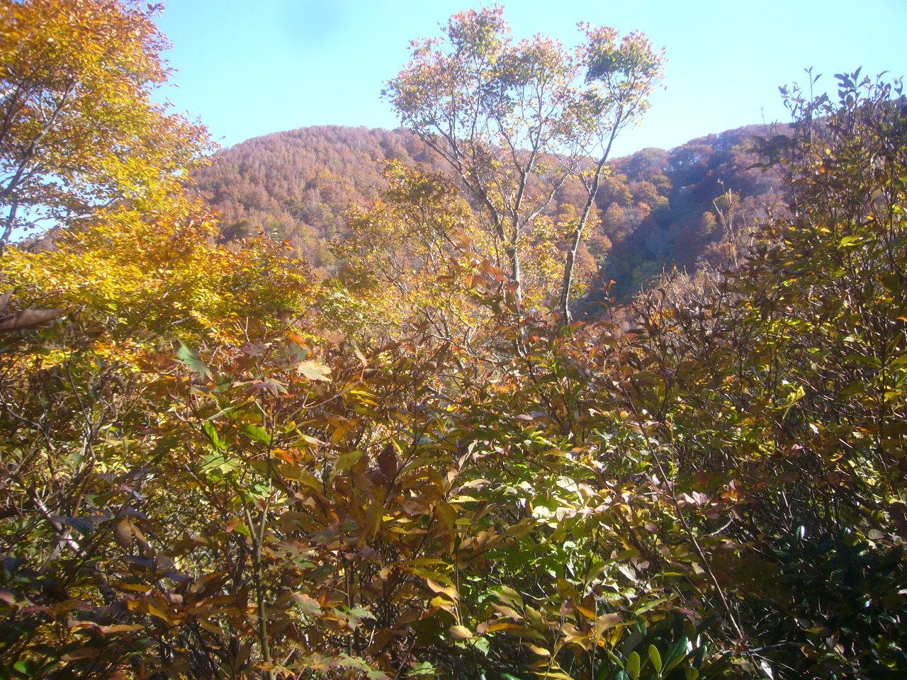 見晴休息地点から富士写が岳左峰 H30.11.03