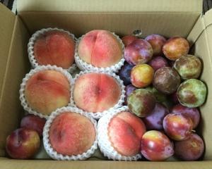 桃とプラムの贈り物