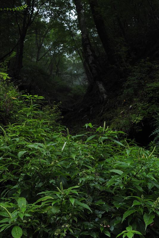 tenninsou002007.jpg