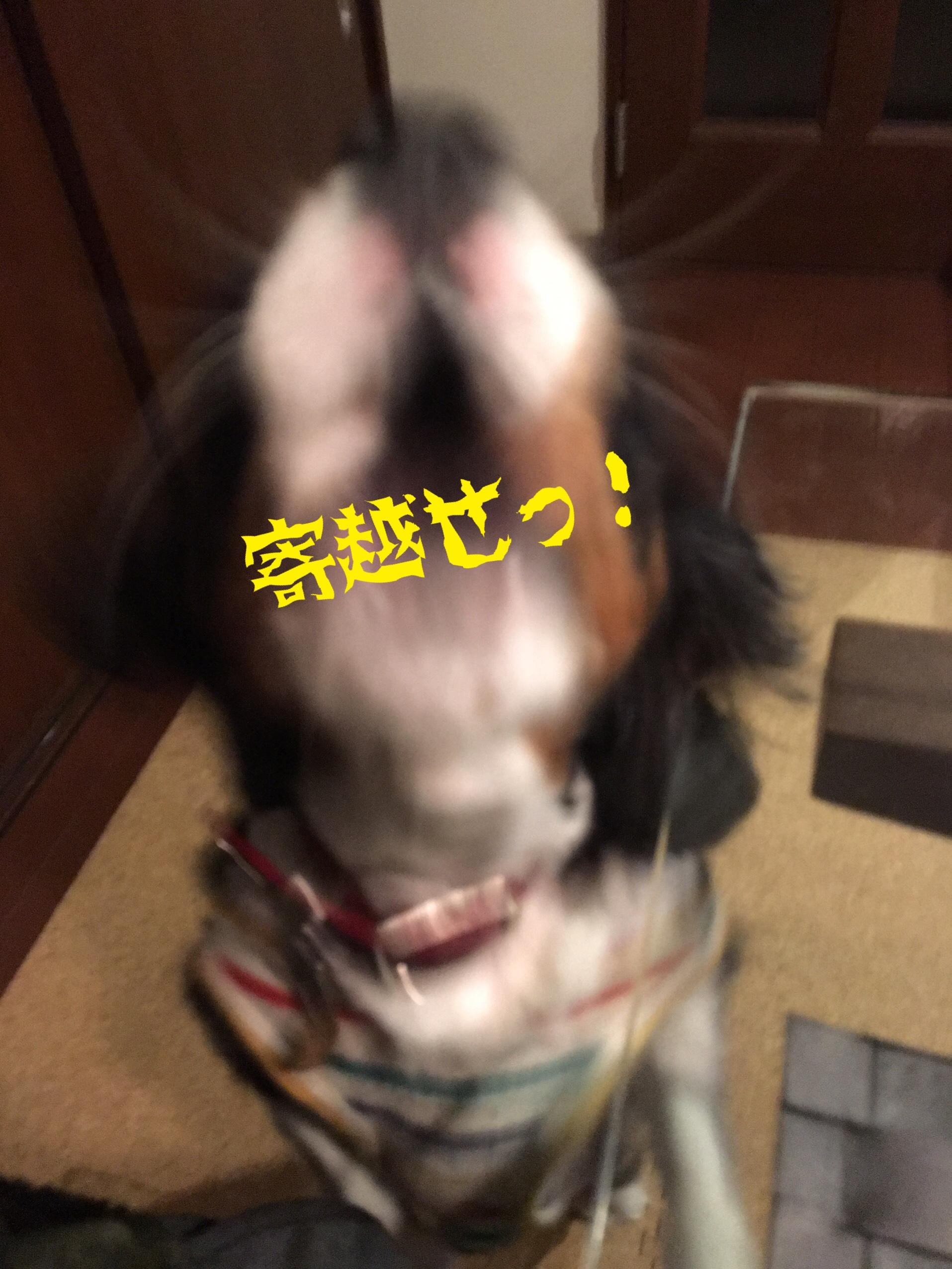 fc2blog_20190202222222e96.jpg