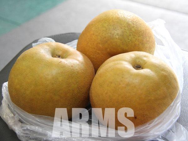 岐阜の美味しい梨