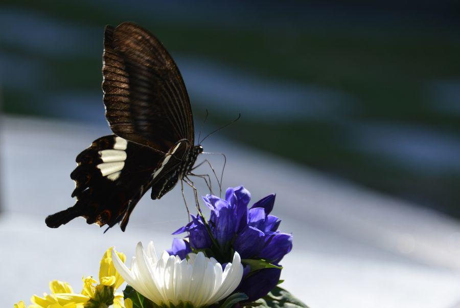 花と蝶-1