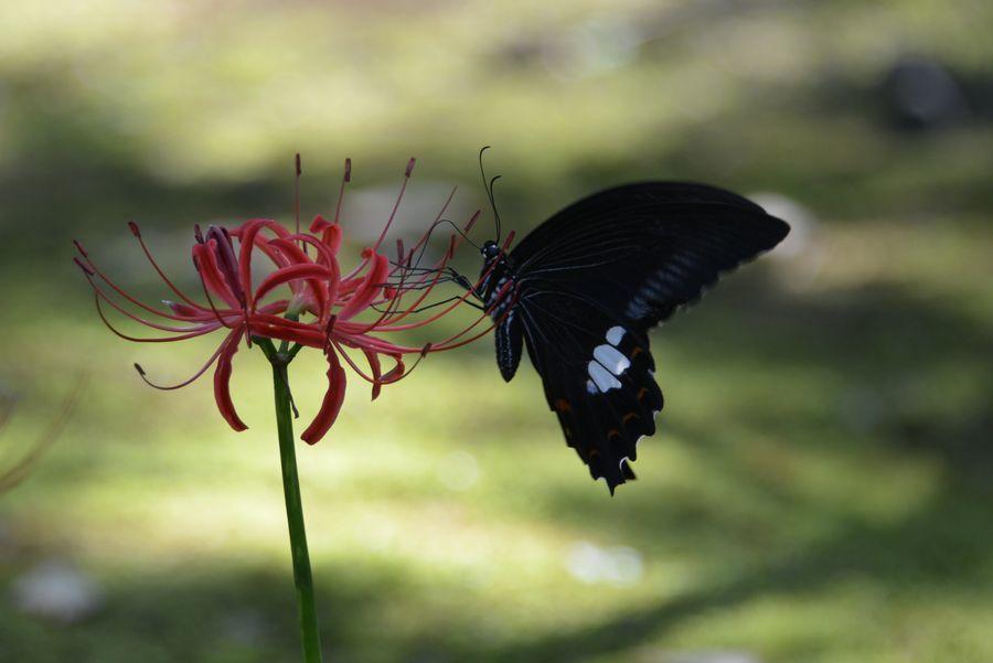 花と蝶-6