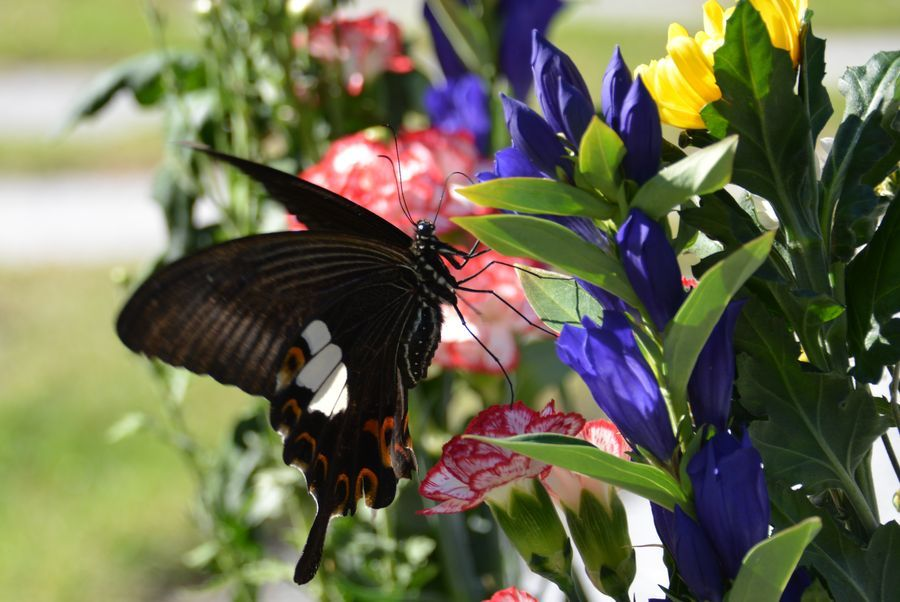 花と蝶-8