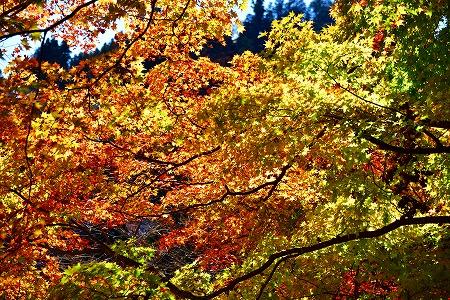 s-御岳山DSC_9720_01