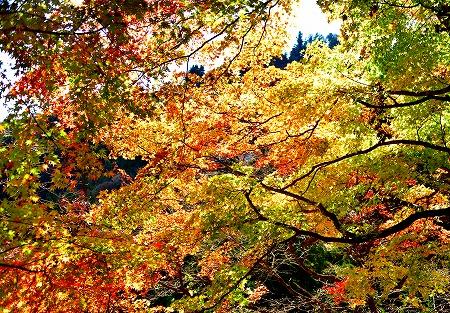 s-御岳山DSC_9721_01