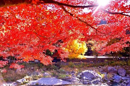 s-御岳山DSC_9781_01