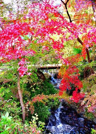 s-御岳山DSC_9794_01