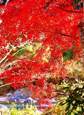 s-御岳山DSC_9809_01