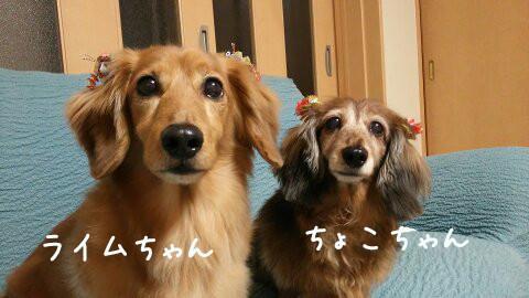 ちょこちゃん&ライムちゃん