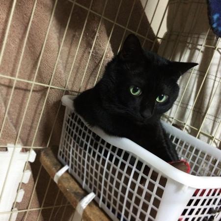 黒猫のジンちゃん