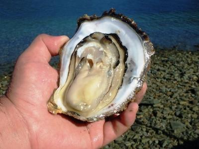 岩牡蠣がプリップリ