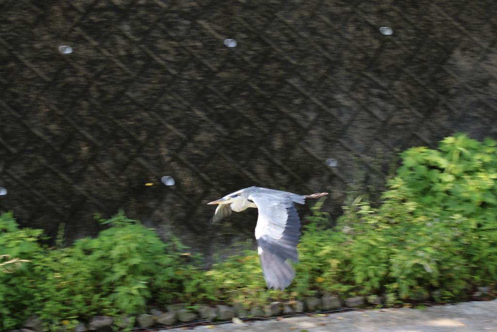 逆川の鳥さんほか_2
