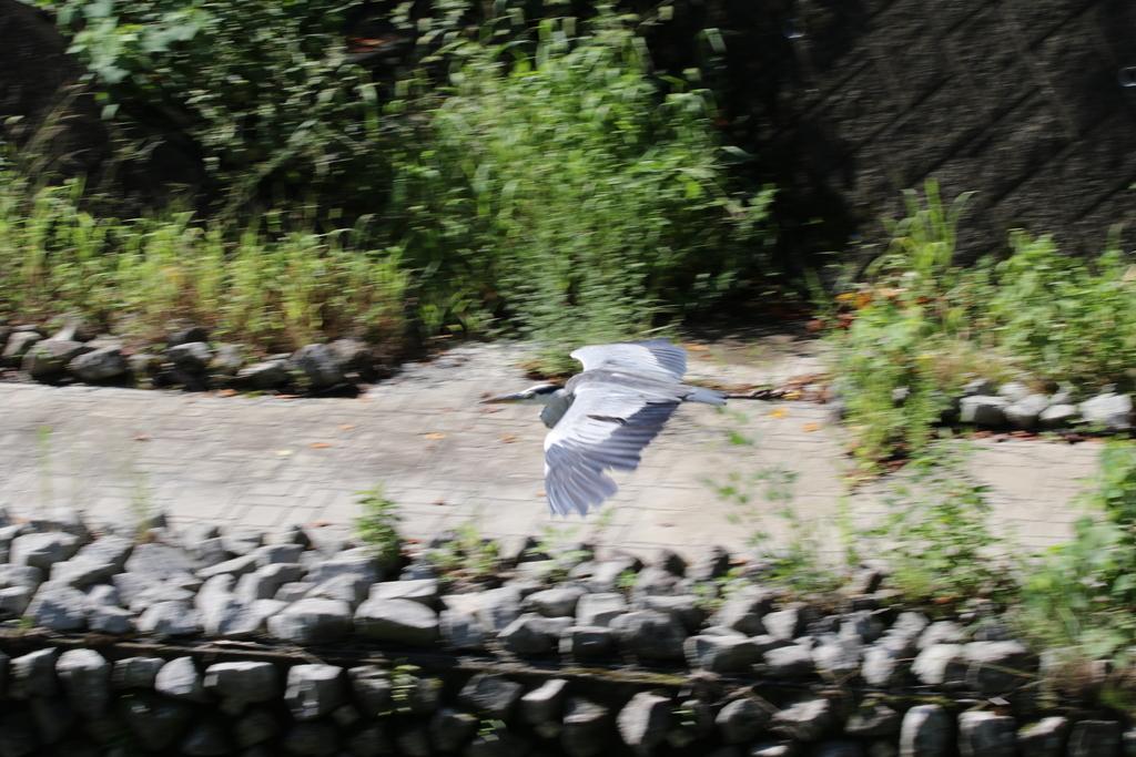 逆川の鳥さんほか_3